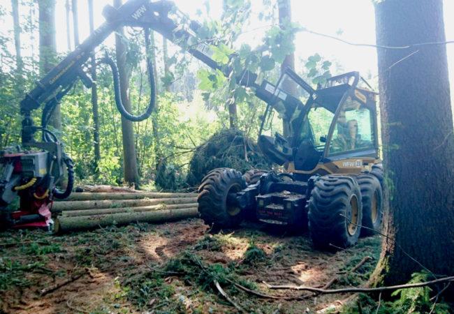 Unser neuster Harvester EcoLog 580C mit LogMax Aggregat 6000