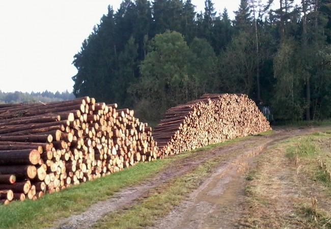 Saubere Holzpolter – nach Längen sortiert