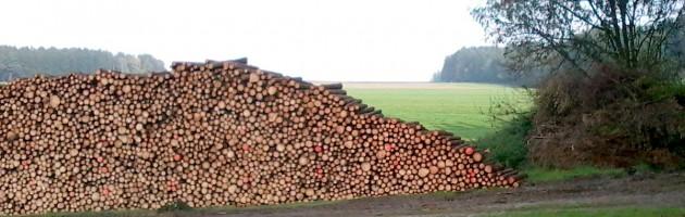 Sauberer Holzpolter