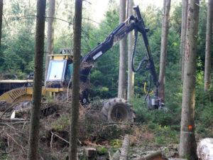 Maschinelle Holzernte mit dem Harvester | Ihr Forstservice in Niederbayern